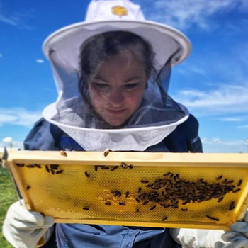 Person in beekeeping uniform inspecting a honeycomb with bees on it